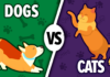 Cats vs Dogs: Which is the better pet?