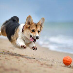 Top 10 Most Hyper Dog Breeds