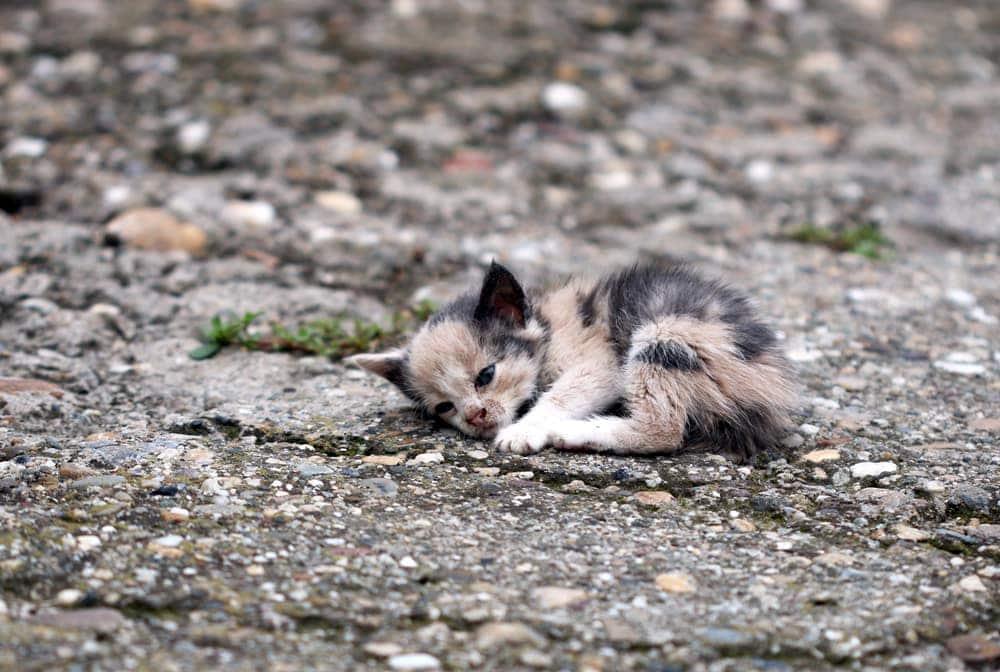 abanombed kitten
