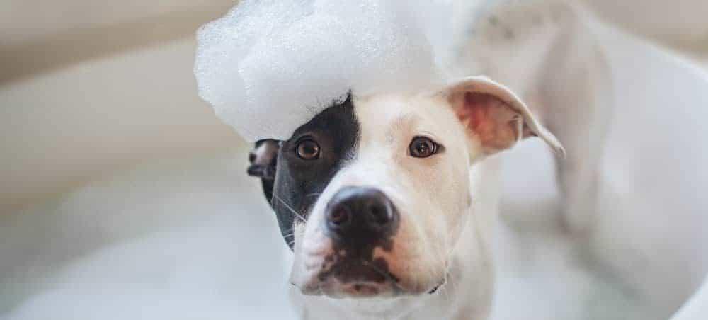 bathing a dog 1 e1573552616150