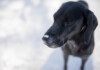 Can Ice Cubes Hurt Your Dog?