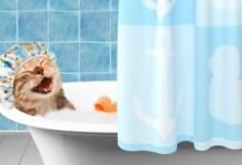 How Often Should You Bathe a Cat?