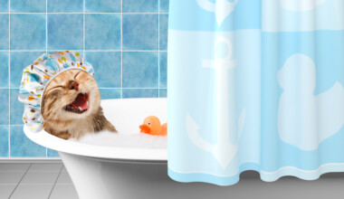 cat bathing