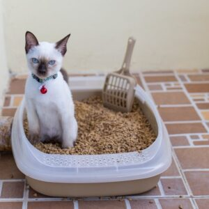 5 Ways to Help Your Constipated Cat