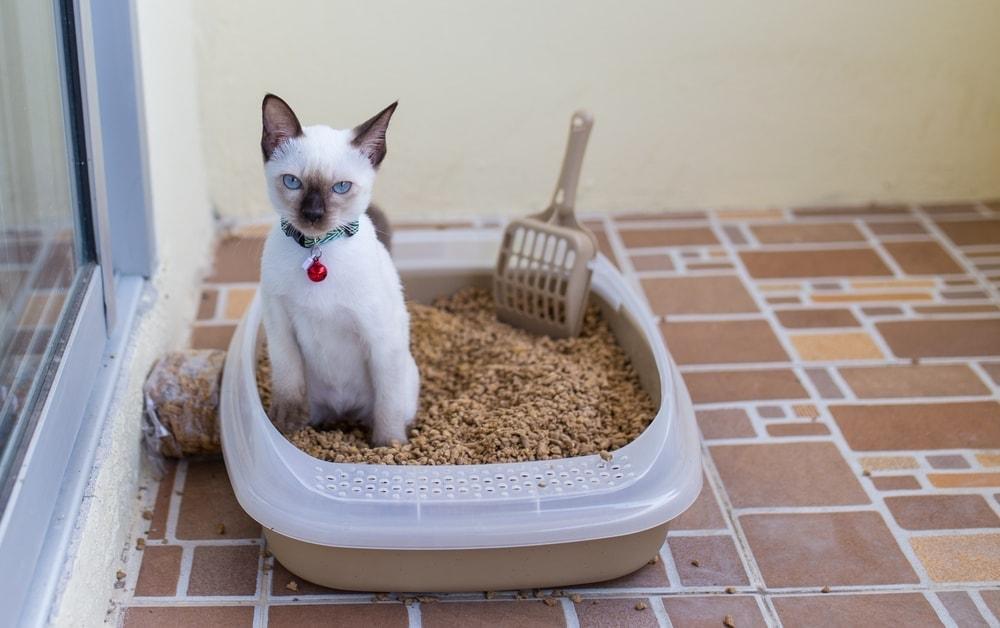 cat box litter