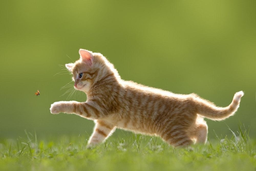 cat flies