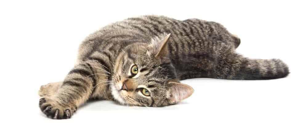 cat in heat 2 1 e1574442629730
