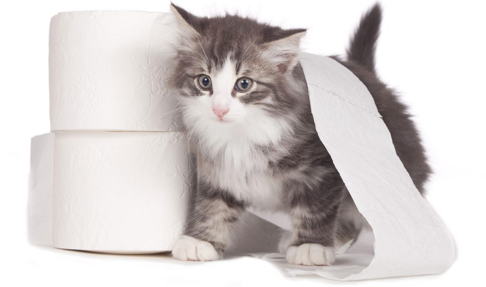 cat in toiletpaper 1 e1574440905379