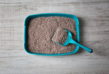 What is in Cat Litter and How Does it work?