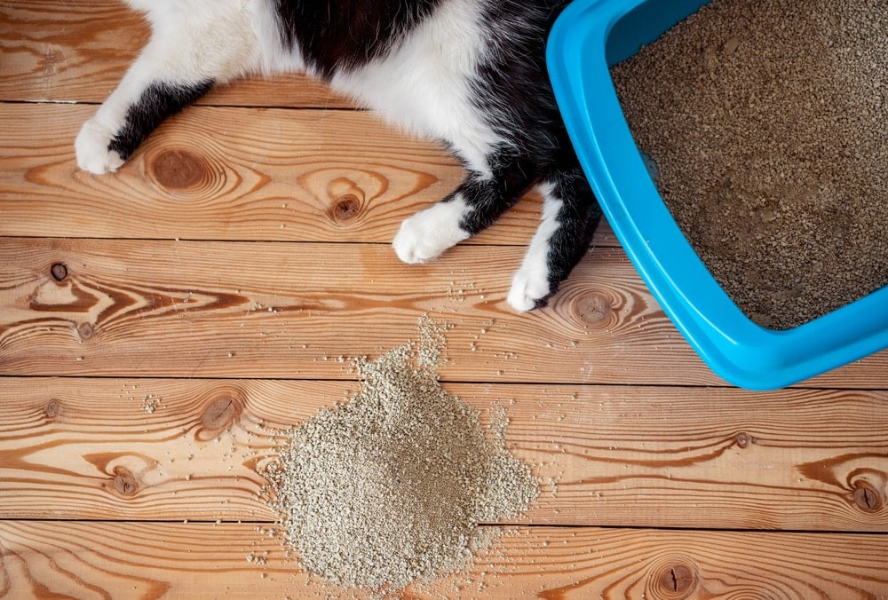 cat litter on floor