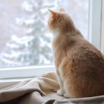 Can an Indoor Cat be a Part-Time Outdoor Cat?