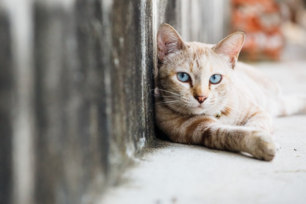 cat on street 1