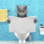 Cat Diarrhea - 4 Home Treatments to Try