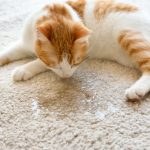 How to Clean Cat Urine - Tips & Information