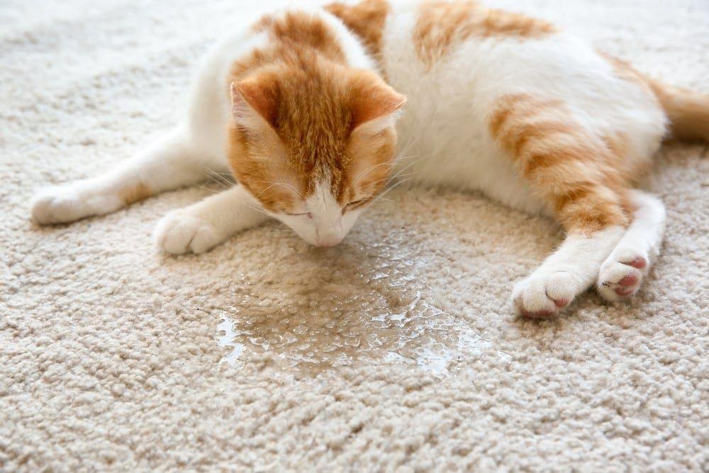 cat on wet spot