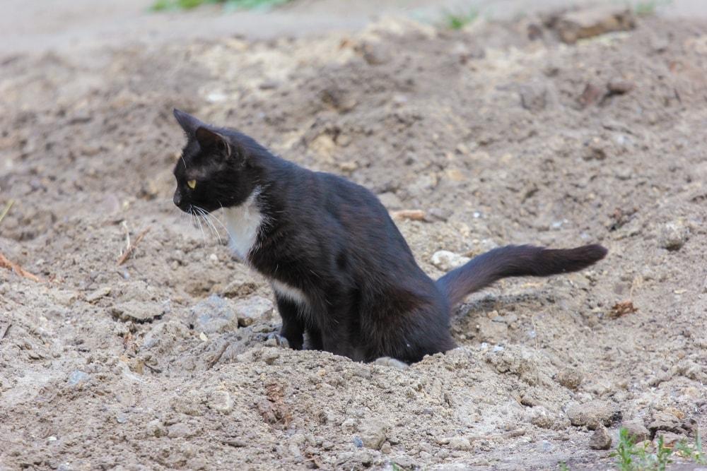 cat pee in sand