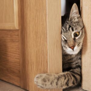 How to Stop a Cat from Scratching Door at Night
