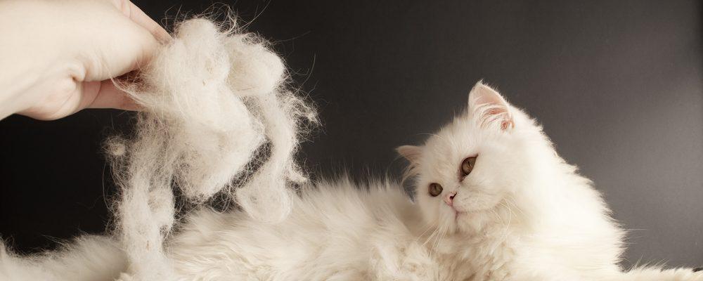 cat shedding 1 e1575122556829