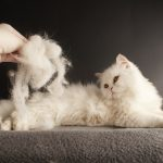 How to Stop or Reduce Cat Shedding