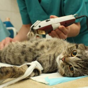 How much does it cost to spay a cat?