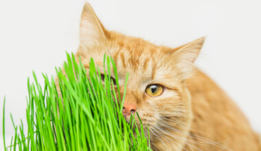cat with cat grass 1