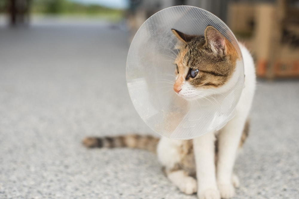 cat with cone 2