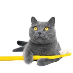 8 Tips About Cat Teeth Cleaning