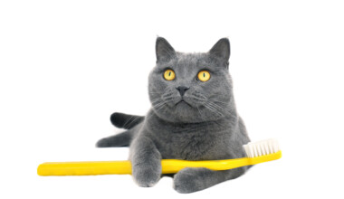 cat with toothbrush
