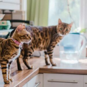 How to Stop a Cat Jumping on the Counter