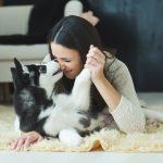 10 Best Companion Dog Breeds