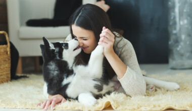 companion dog