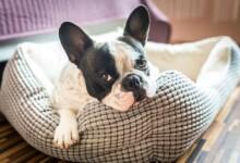 10 Best Indestructible Dog Beds