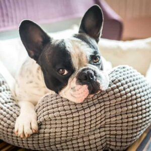 10 Best Indestructible Dog Beds in 2020