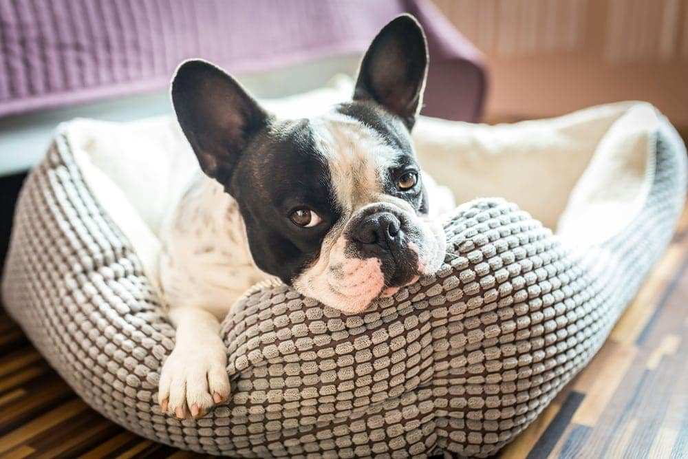 10 Best Indestructible Dog Beds In 2019 Petsoid