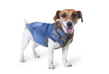 10 Best Winter Coats for Dogs