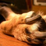 What to Do if You Cut Your Dog's Nails Too Short?