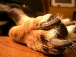 dog nails too short 1