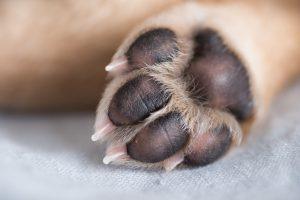 dog paw 2