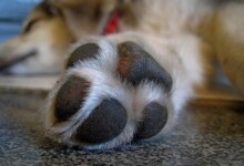 Dog Paw Care - 6 Tips you should know