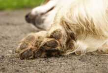 Why Do Dogs Chew Their Paws or Nails?