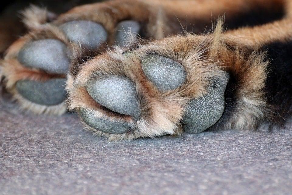 dog pawss