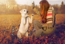 9 Easiest Dog Breeds to Train