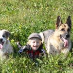 10 Best Large Dog Breeds for Families with Kids