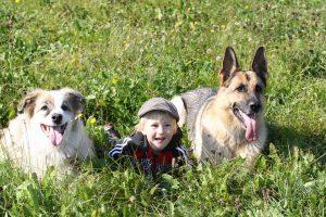 dogs children