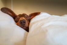 11 Best Dog Breeds for Laid Back People