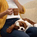 10 Best Lap Dog Breeds