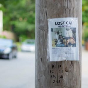 How to find a lost cat? - Information