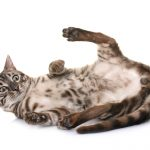 When should you spay or neuter your cat?