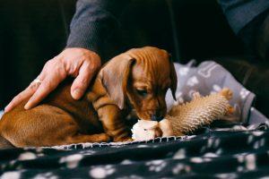 new dog owner