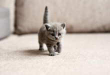 Bringing a New Kitten Home - Tips & Information